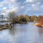 Burgie Arboretum